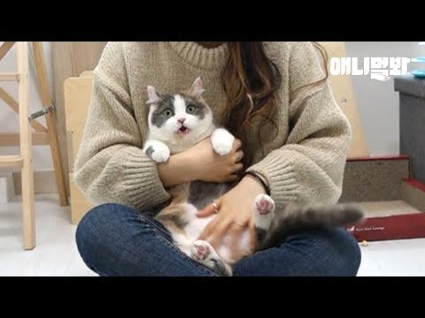 고양이는 똑똑하다. ㅣBANG The World's Smartest Cat Plays Dead After A Finger Shot