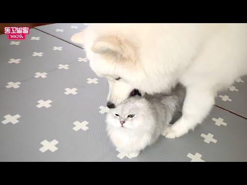 고양이 스킨십을 배워버린 강아지