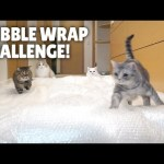 Bubble Wrap Challenge! Cats Try to Walk on Bubble Wrap!