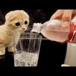 子猫が初めて炭酸水を見たときの反応。
