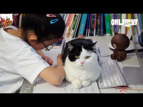 집사들 사이에선 수2보다 공부하기 어렵다고 소문난 고양2과목ㅋㅋㅣGirl Is Being A Cat To Hang With Her Cats