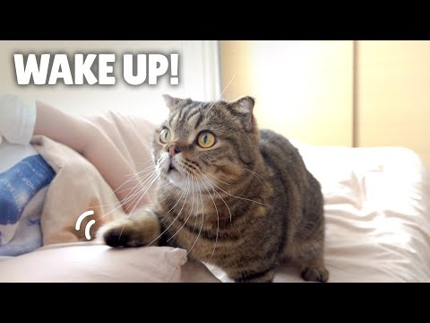 My Fluffy Cat Alarm Clocks | Kittisaurus