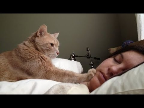 Cat wake up their owner by cute actions ⏰😸  Cute Alarm Clock Ever