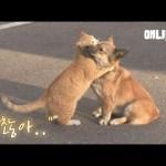 주인에게 버림받은 강아지를 위로해주는 고양이 ㅣCat Comforts A Dog Who's Abandoned By His Owner