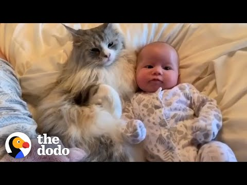 6 Stages Of A Cat Falling In Love With His Baby Sister | The Dodo
