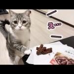 かりんとうをう◯ちと勘違いして、食べてる主を心配してくる猫!