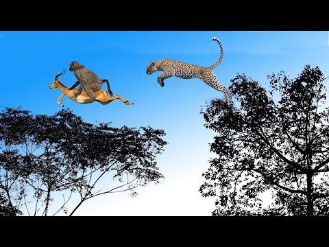 CHEETAH, The Most Agile and Deadly Big Cat   Cheetah vs Impala, Underwater Ambush from Crocodile