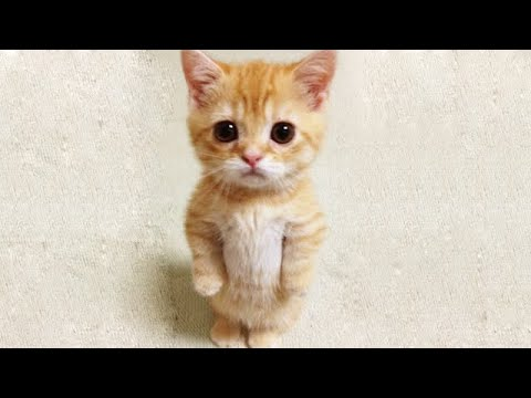 OMG So Cute Cats ♥ Best Funny Cat Videos 2021 #90