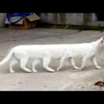 OMG So Cute Cats ♥ Best Funny Cat Videos 2021 #94