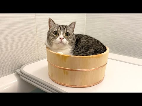 どうしても混浴したがる猫がついにこうなりました…w