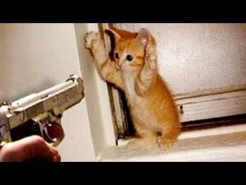 OMG So Cute Cats ♥ Best Funny Cat Videos 2021 #101