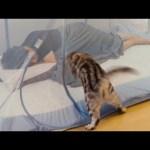 고양이와 모기장에서 자면 안되는 이유😼