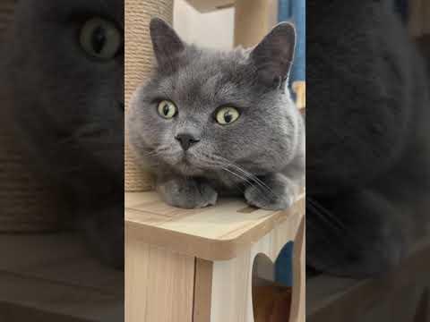cat reaction 😂🤣