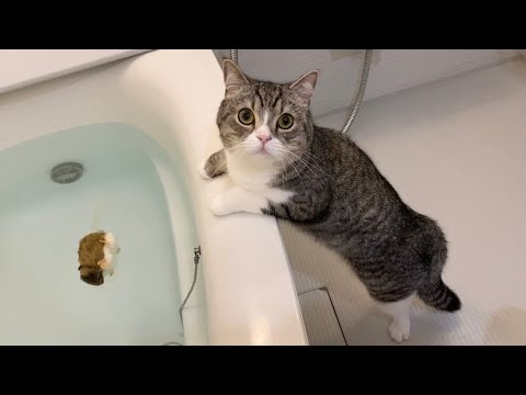風呂にネズミを落として心配になってる猫がかわいすぎたw