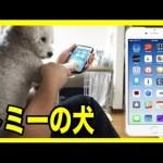 [水溜りボンド]犬の肉球でもiPhoneのロック解除は解除できる!?