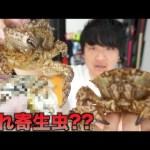 [トミック]生きたクリガニを蟹味噌エグったら寄生虫みたいなのいたww