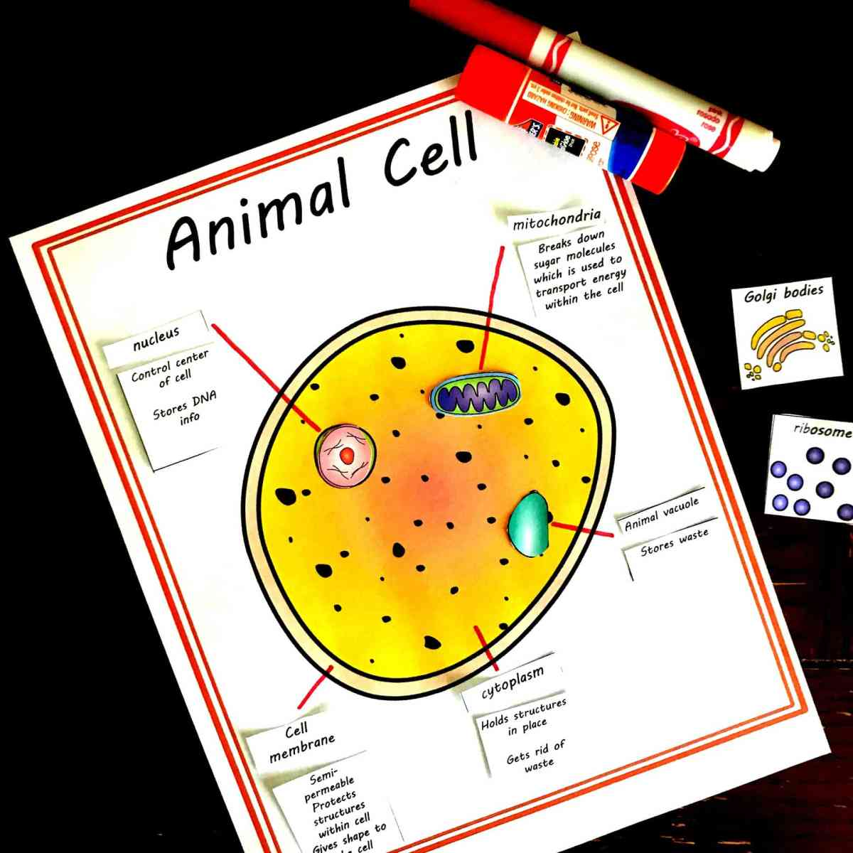 Free Build Your Own Animal and Plant Cell Worksheet