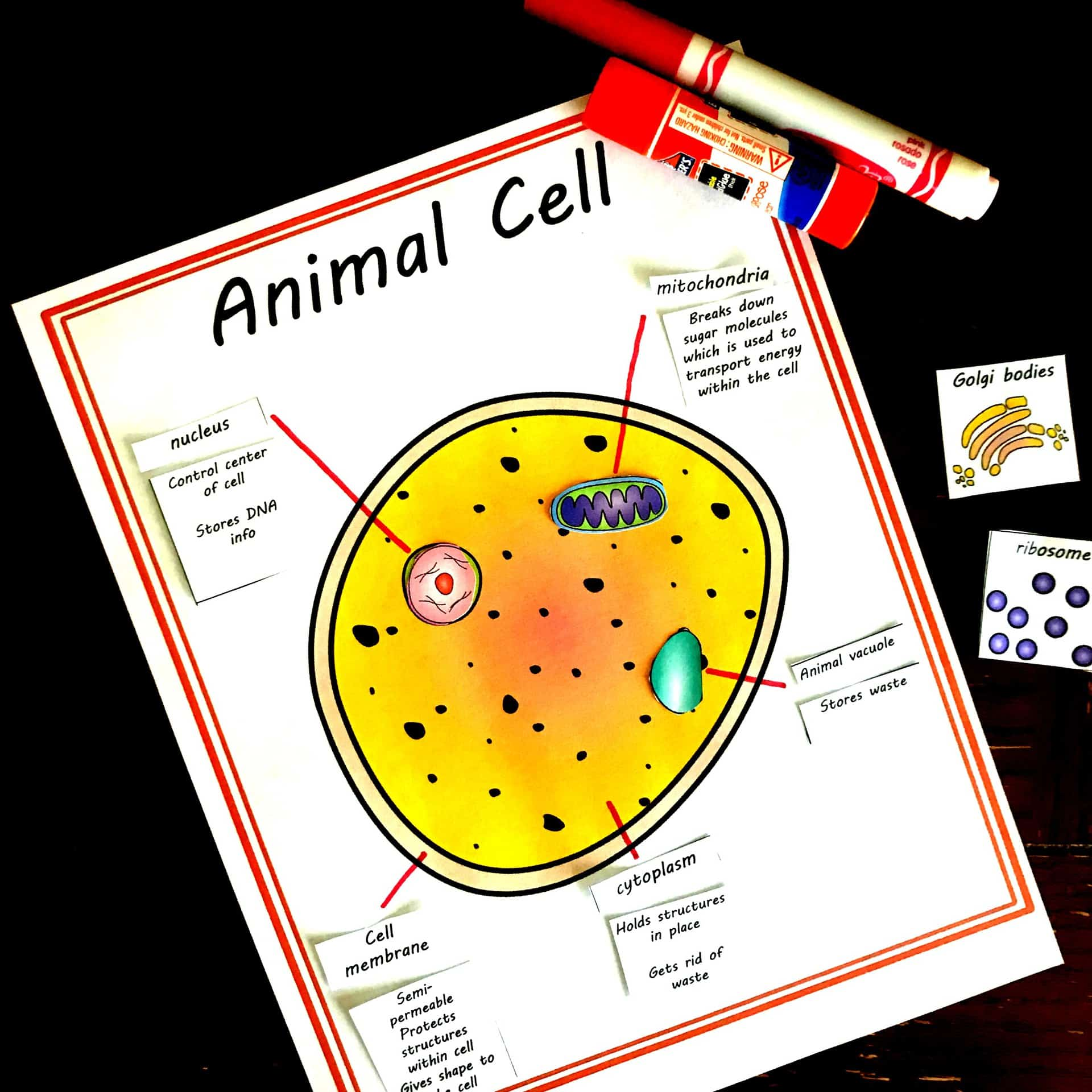 Free Cut and Paste Animal and Plant Cell Worksheet (Comparing Cells)
