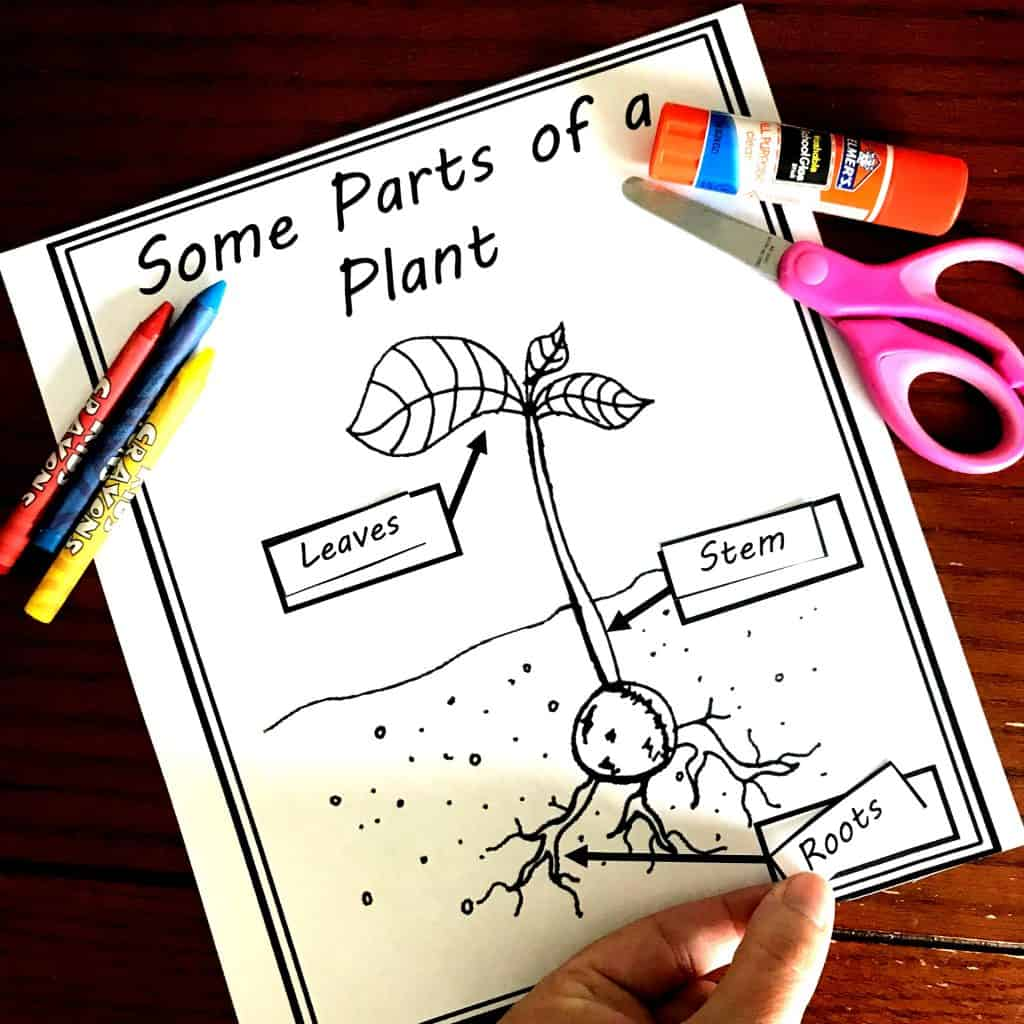 Five Free Irresistible Parts Of A Plant Worksheets
