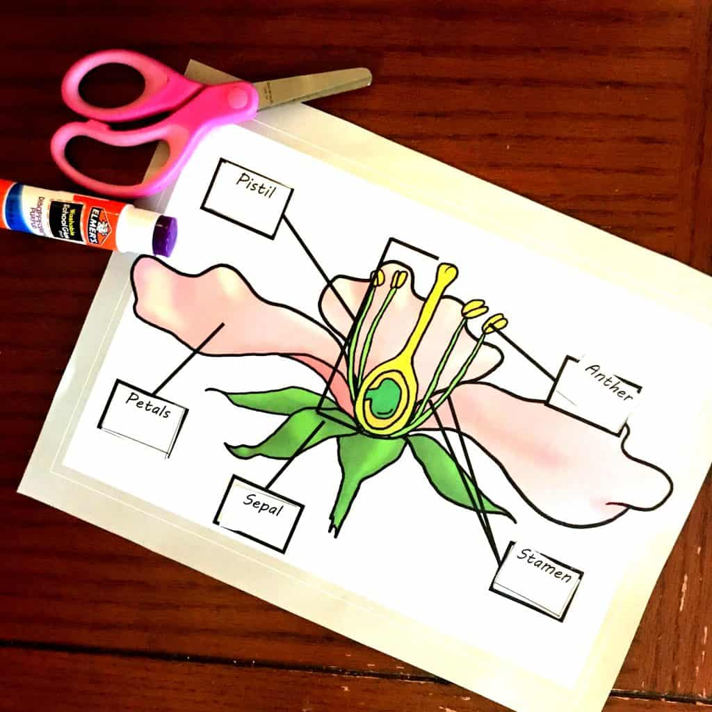 Free Coloring And Cut And Paste Activity For Parts Of A