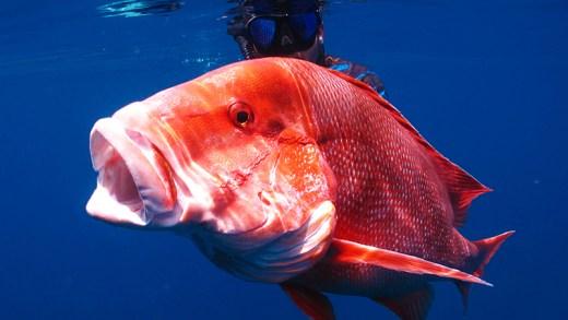 süper doğa ve balıklar