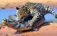 En Sert Vahşi Hayvan Saldırıları
