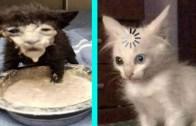 Kediler Yine İş Başında! Tiktok'ta Paylaşılan Komik Kediler