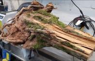 Ağaç Oymacılığı ile Abajur Yapımı – Muhteşem İşçilik