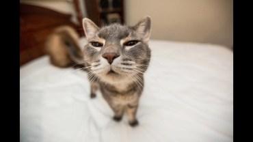 Kedilerin Hayatımızı Renklendiren Komik Halleri