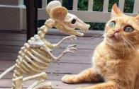 Kahkaha Tufanı Yaratan Kedi ve Köpeklerden Eğlenceli Anlar