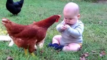 Sevimli Bebekler ve Hayvanlar İş Başında!