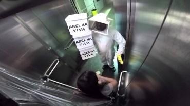 Asansörde İnsanları Çılgına Çeviren Arı Şakası