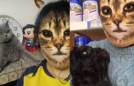 Kedi Filtresini Gören Hayvanların Verdiği Komik Tepkiler
