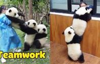 Komik Pandalar ile Eğlenceli Anlar Karşınızda!
