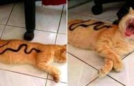 Oyuncaklara Karşı Verdikleri Komik Kedi Tepkileri!