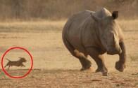 Kalpleri Eritecek Eğlenceli Hayvanlardan Sıcacık Anlar