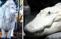 Barış Sembolü Gibi Duran Beyaz Hayvanlar Karşınızda!