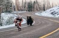 Bisiklet Sürenlere Saldıran Çılgın Vahşi Hayvanlar