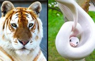 Hayran Kalacağınız Eşsiz Hayvanlar – Şaşırtan Görseller