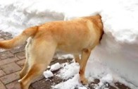 Komik Hareketlerle Sahiplerini Şaşırtan Şapşal Köpekler