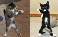 Sevimli Yavru Kediler Yaramazlık Yapmadan Duramıyorlar!