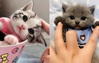 Aşırı Sakin Halleri ile Mest Eden Sevimli Kediler!