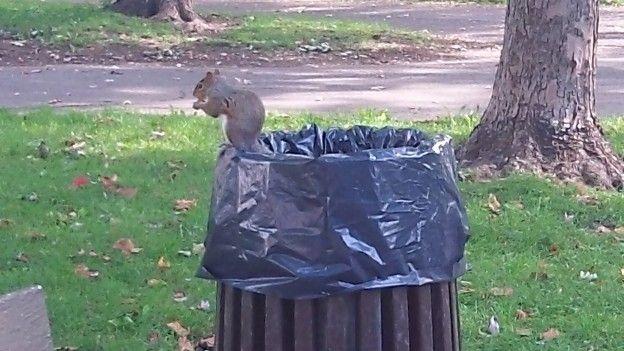 Les écureuils sont très nombreux à Montréal vous pouvez les voir partout dans les parcs de la ville surtout sur le Mont Royal photo blog tour du monde voyage https://yoytourdumonde.fr