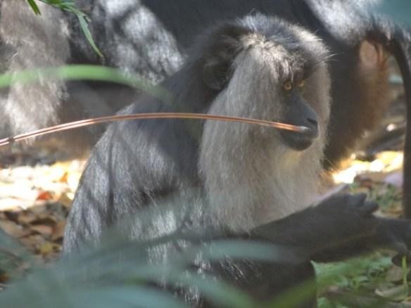Australie- Rockampton: Jardin Botanique...la surprise du chef!