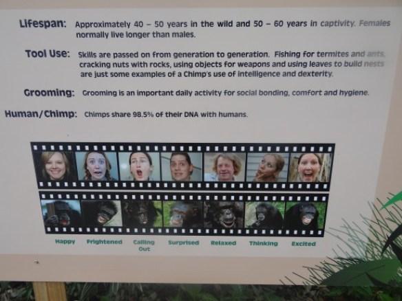 Australie- Rockampton: Jardin Botanique, singes et hommes ADN.