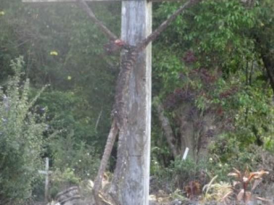 Nouvelle-Caledonie: Tribu de Tienganite