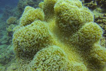 Superbe coraux du coté de Matanzas à Cuba photo blog voyage tour du monde https://yoytourdumonde.fr