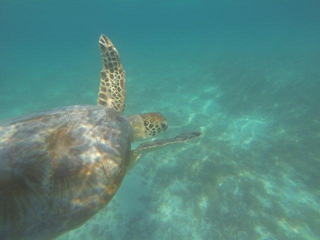 plongee-lifou-nouvelle-caledonie-tortue