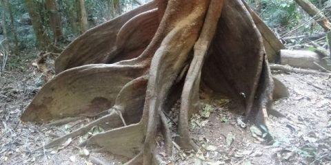 australie-queensland-mossman-foret-arbre-voyage-travel