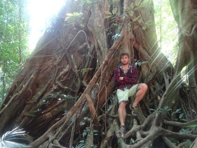 Australie- Queensland: Cela peut vous donner une idee de la grandeur des troncs d'arbres...